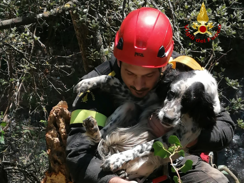 vigili-del-fuoco-salvano-un-cane-caduto-in-un-dirupo