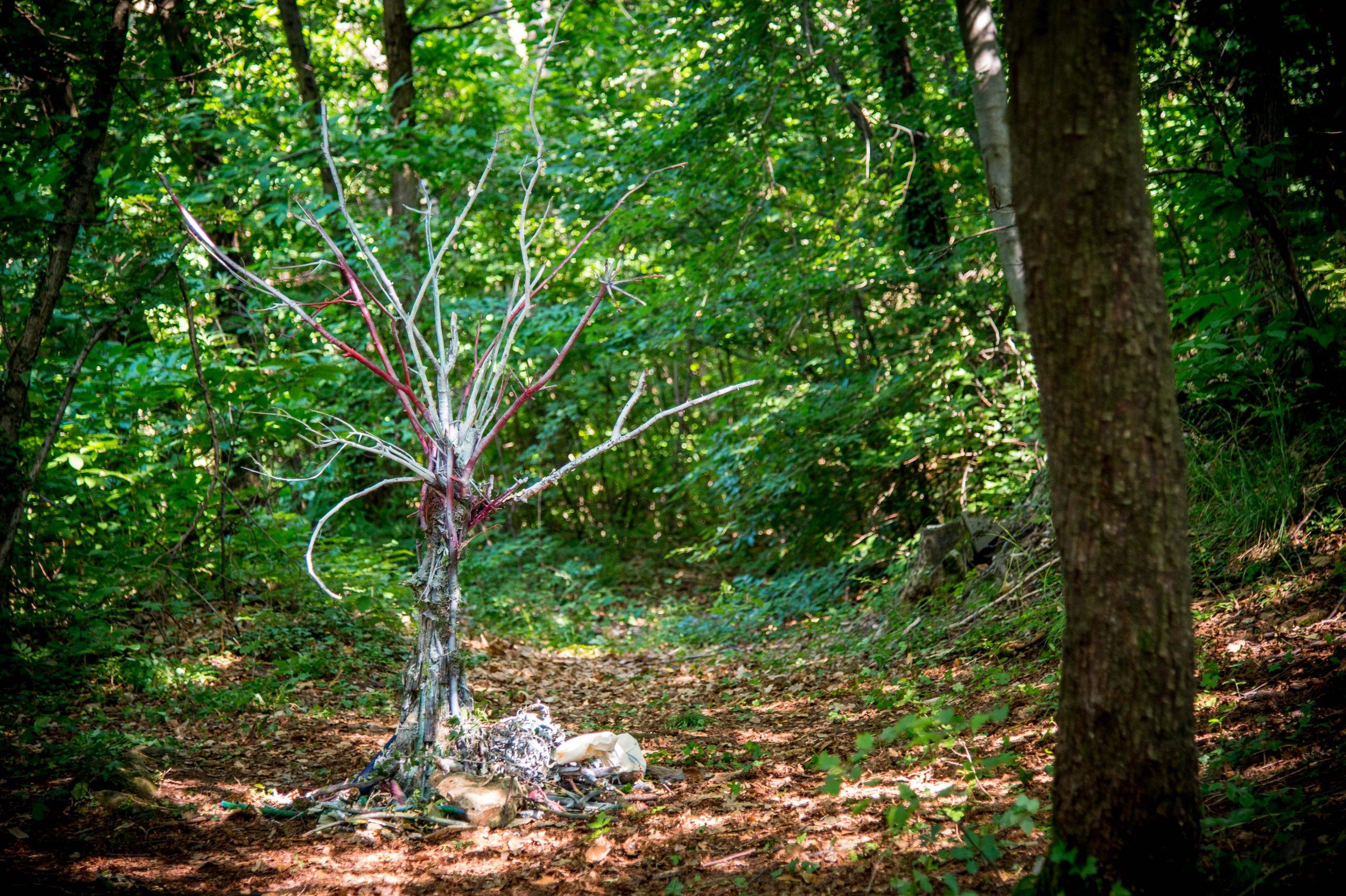 alberi-maestri-kids